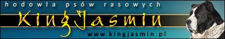 Kingjasmin Hodowla Psów Środkowoazjatyckich